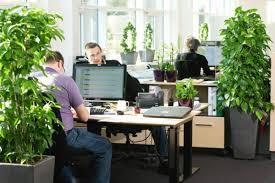 Зеленый офис - счастливые сотрудники